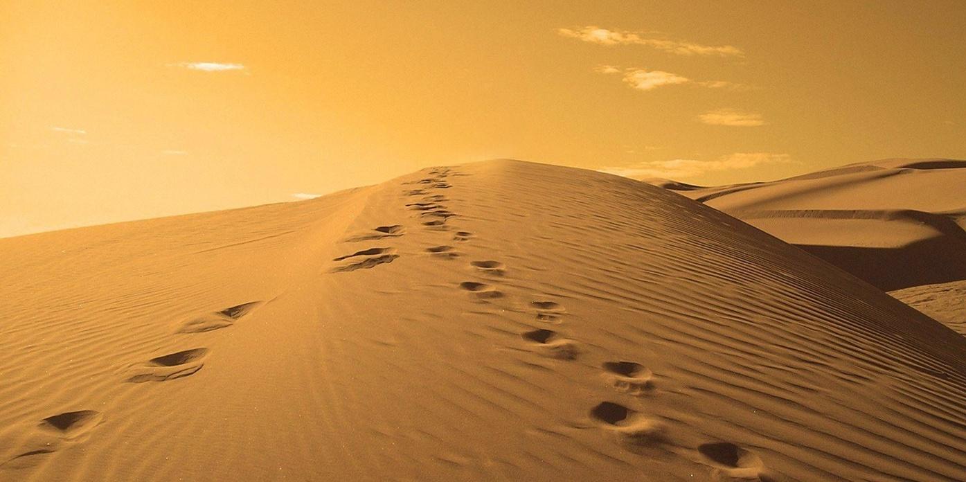 footsteps_nachfolge_business